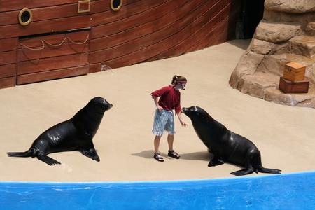 Укрощение тюленей