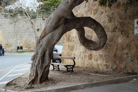 Дерево с аномальным стволом