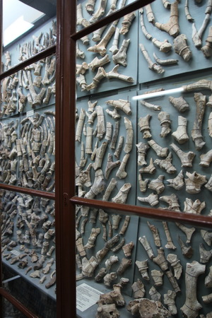 В пещере найдено огромное количество костей вымерших животных