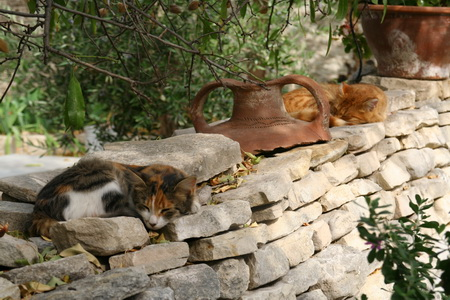 Кошки на острове - почти священные животные