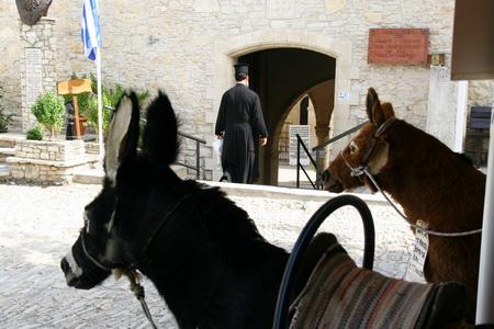 На Кипре можно стать водителем... осла