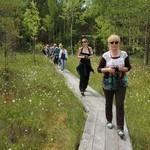 Латвия. Латгалия. Отдых на болоте