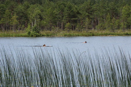 Говорят, вода в озере обладает омолаживающими свойствами. Важно искупаться голышом!
