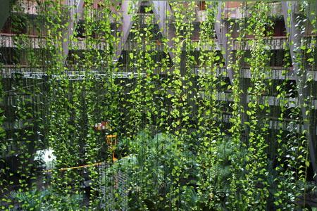 Сверху свисают лианы, создавая иллюзию джунглей