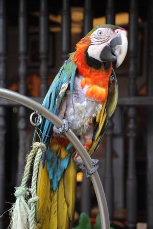 """Местные попугаи охотно кричат """"Ола!"""" - """"Привет!"""""""