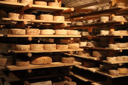 Сыр похож на слитки золота