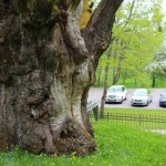 Литва. У лукоморья дуб зеленый