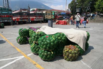 На крышах автобусов перевозят грузы. В данном случае грузом является авокадо