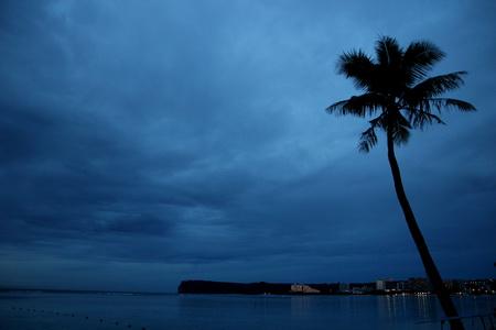 Не яблоня, а пальма является обязательным атрибутом Рая