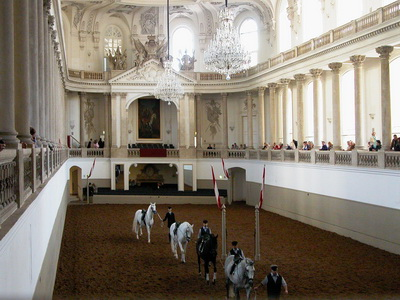 В Вене танцуют даже лошади