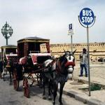 На Мальту по делу и на отдых