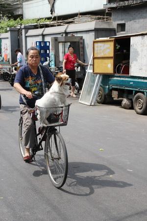Услугами велорикши может воспользоваться даже собака