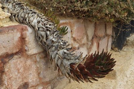 Вход в деревню охраняют жутковатые растения