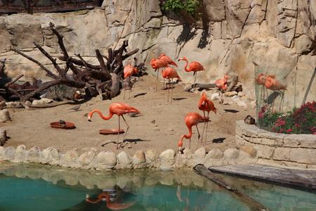 Зоопарк нового поколения «Terra Nature»