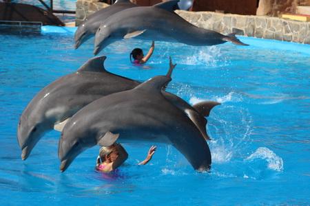 Парк морских и экзотических животных «Mundomar»