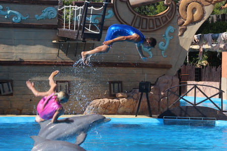 Вместе с дрессировщиками дельфины выполняют фантастические цирковые акробатические трюки