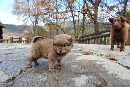 Гостей сопровождают симпатичные собачки