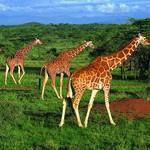 Посетить страны Восточной Африки стало проще