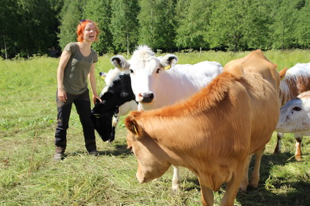 Коровы-ангелы