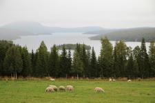 Норвежская пастораль