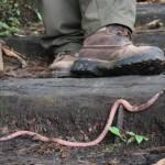 Руанда. Кто живет в дождевом лесу?