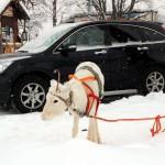Финляндия. На машине хорошо, а на оленях лучше!